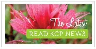 Read KCP's News