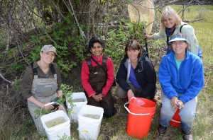 Leopard Frog reintroduction by Cam Gillies 1