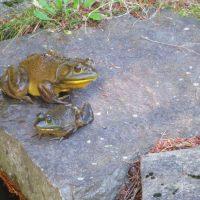 KCP Stewardship - Bullfrog - John Kirby