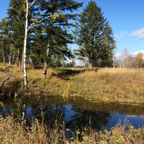 Construct a Wetland on your Property