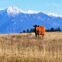 2011 Zehnder Ranch - Farms & Ranching Columbia Valley