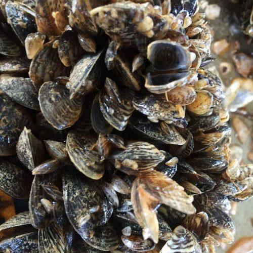 Report Aquatic Invasive Species in the Columbia Shuswap