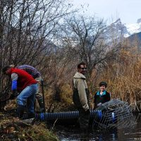 KCP Stewardship - Beavers & Wetlands