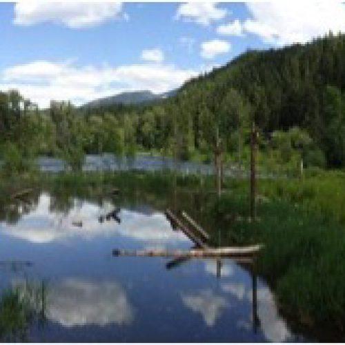 Wetland/Riparian Restoration and Enhancement