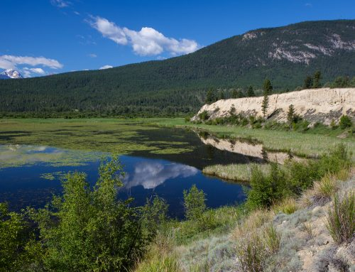 Conserving wild landscapes for the Columbia Valley community: Columbia River Wetlands-Edgewater Conservation Property