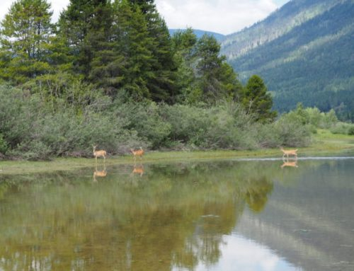 Kootenay Lake local conservation fund accepting 2022 proposals